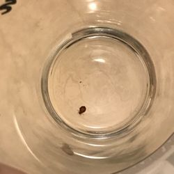 Photo Of Affordable Bed Bug Exterminators Milwaukee Wi United States