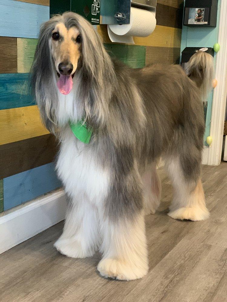 Classy Canine's Wiggle Rumps: 2602 Castro Valley Blvd, Castro Valley, CA