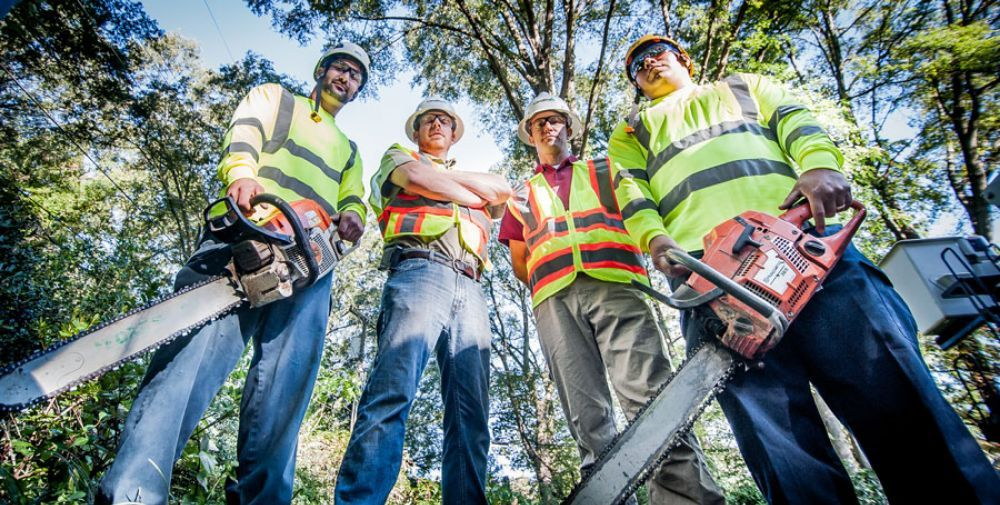 Affordable Arborist: Vacaville, CA
