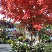 Just One Small Photo Of Evergreen Garden Center   Clovis, CA, United States  ...