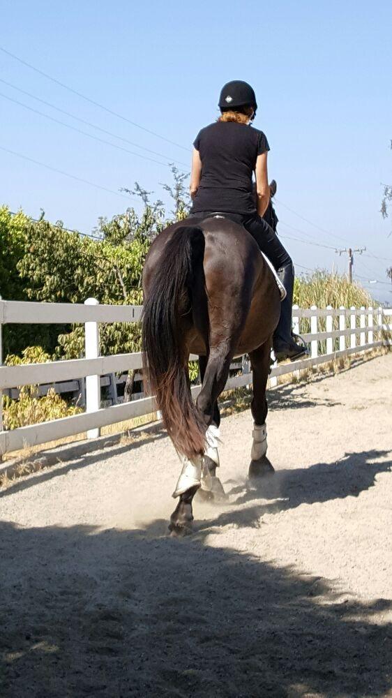 Linda Shue Dressage Training: 1527 Lemon Ave, Bradbury, CA
