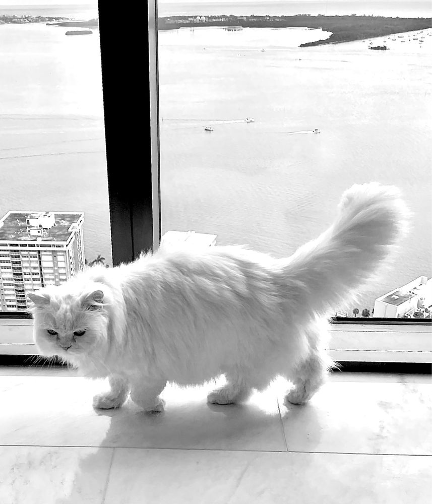 Miami's Mobile Pet Grooming