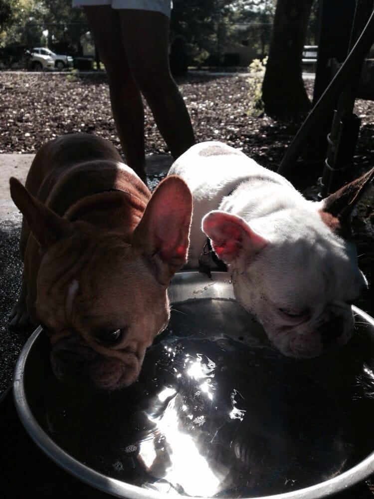 Pawmosa Dog Park Casselberry Fl