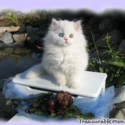 Yelp Reviews for Treasured Kittens - (New) Pet Services - Fallbrook, CA