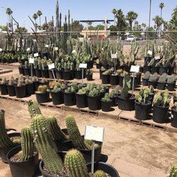 Photo Of Arizona Cactus S Chandler Az United States