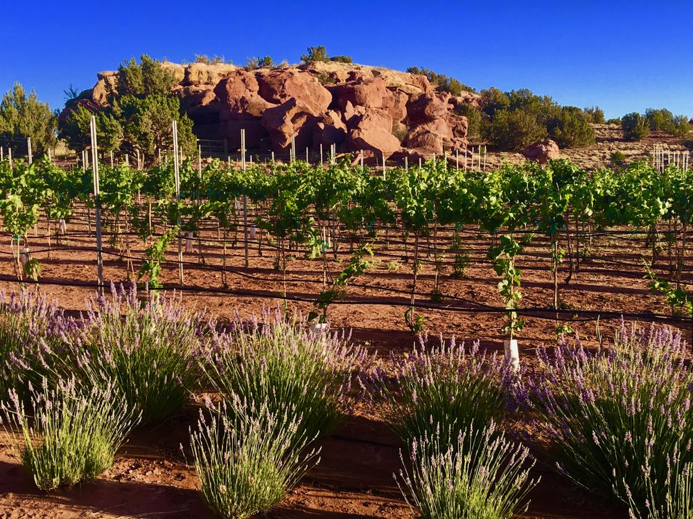 Red Rock Ranch & Farms LLC: Cr 5305, Concho, AZ