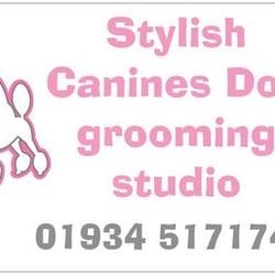 stylish canines dog grooming studio   pet groomers   59