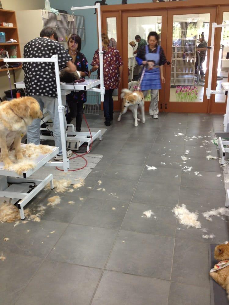 Mobile Pet Grooming Long Beach Ca