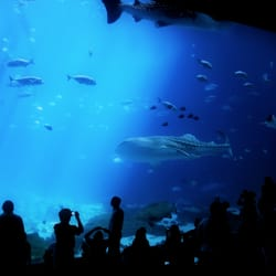 Georgia Aquarium 5425 Photos 2113 Reviews Aquariums 225