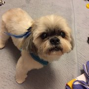 Pet wash 13 photos 27 reviews pet groomers 5667 n las sage mobile grooming solutioingenieria Gallery