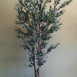 emerald silk plants - 11 photos - florists - 2701 n orange-olive rd