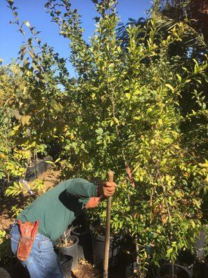 Exotica Rare Fruit Nursery 2508 E Vista Way Vista, CA