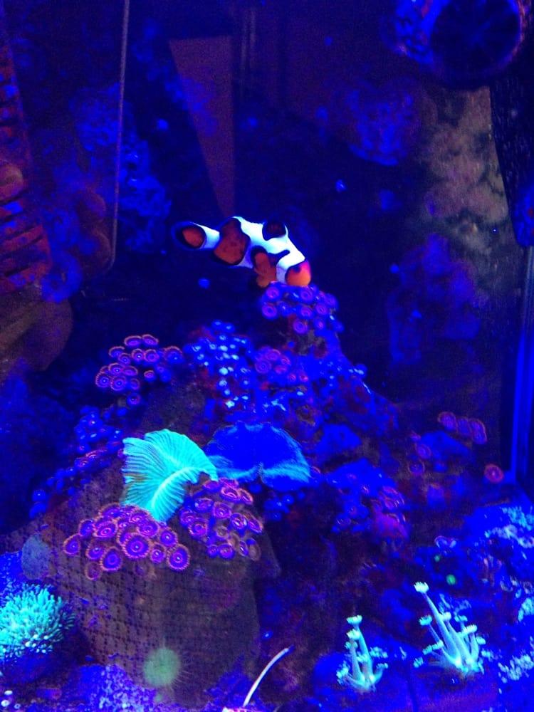 Nemo Yelp