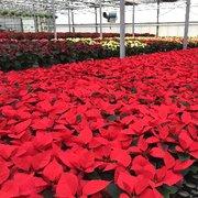 McCue Garden Center 29 Photos 18 Reviews Nurseries