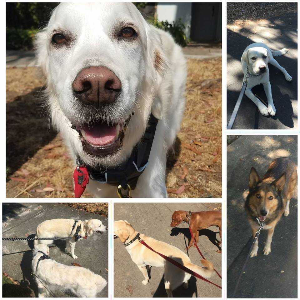 Tails Up Pet Care: 275 Hawthorne Ave, Palo Alto, CA