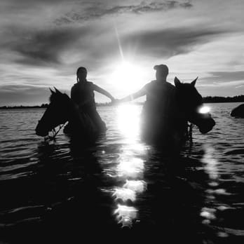 Photo Of Beachhorses Bradenton Fl United States