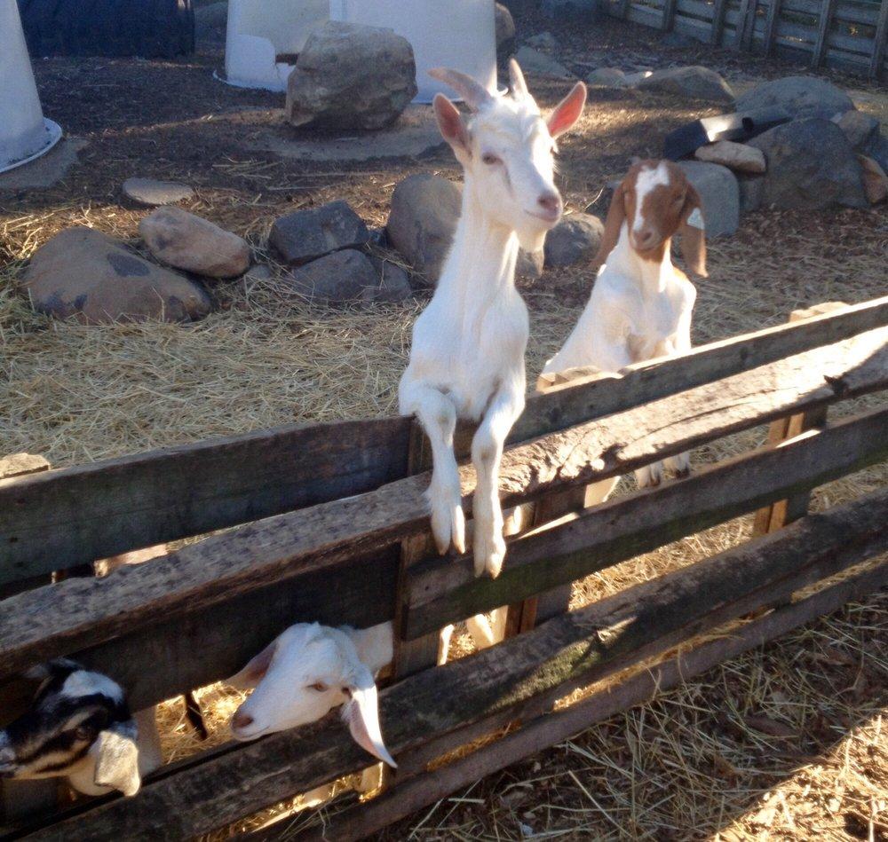 Goodale Farms: 250 Main Rd, Riverhead, NY