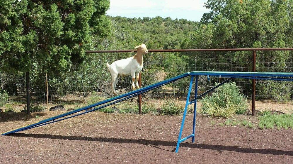 Ruffin It Mountain Pet Resort: 1712 Timber Ridge, Show Low, AZ