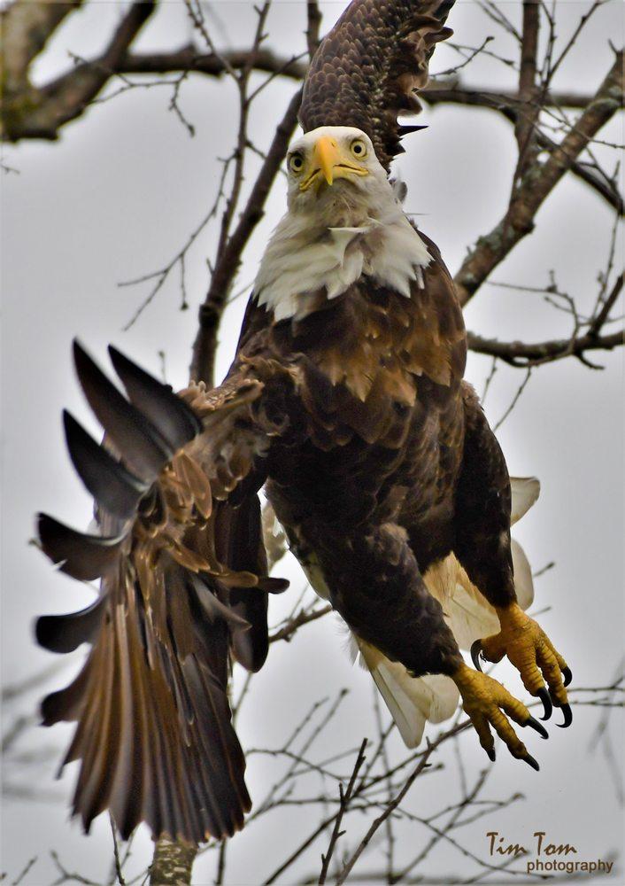 National Eagle Center: 50 Pembroke Ave S, Wabasha, MN