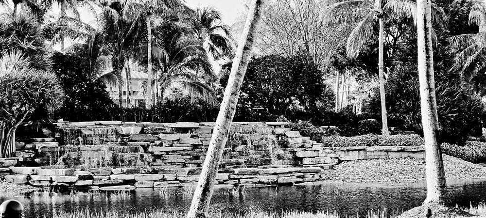 Hyatt Coconut Plantation Resort - Slideshow Image 3
