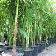 Photo Of Pomona Nursery Ca United States
