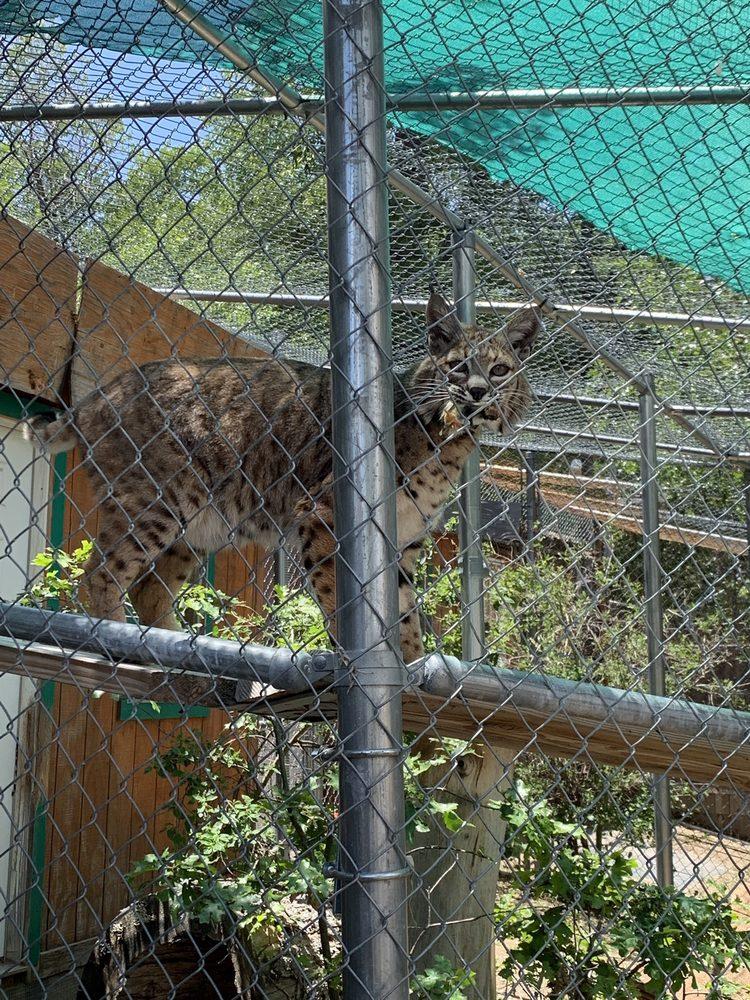 Wildhaven Ranch: 29450 Pineridge Dr, Cedar Glen, CA
