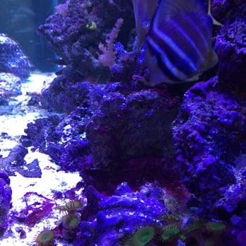 Lovely The Ocean Floor   64 Photos U0026 55 Reviews   Pet Stores   2347 W Thomas Rd,  Phoenix, AZ   Phone Number   Yelp