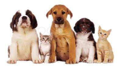 Best Friends Pet Clinic: 16875 S Main St, Galesville, WI