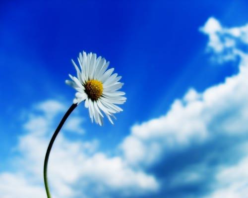 Freshhomes daisy fresh homes - home cleaning - rancho palos verdes, ca