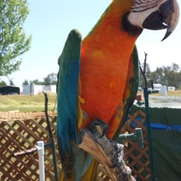 Northern California Parrot Rescue & Rehab - Animal Shelters