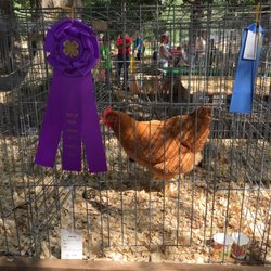 South Greenville Fair - 29 Photos - Festivals - 100 Park Dr