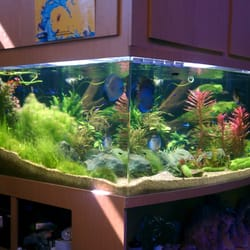 age of aquariums 80 photos 133 reviews aquarium services