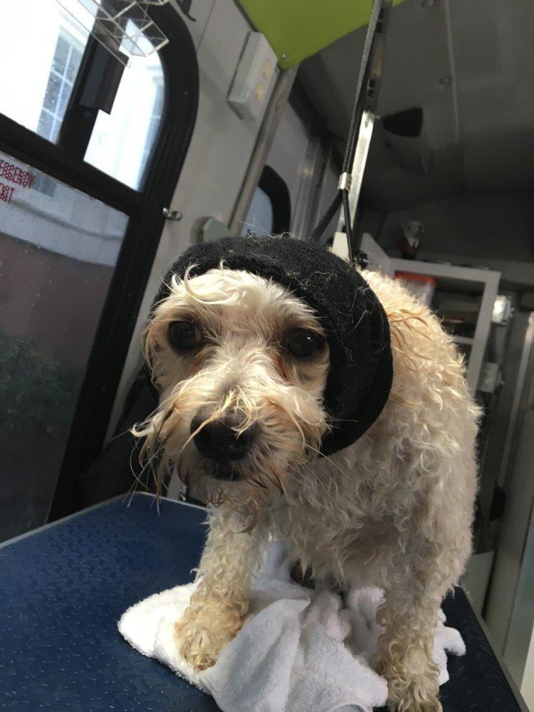 Dog Grooming Orange County Ca