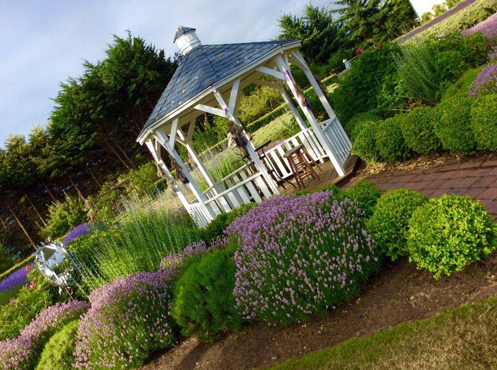 Kitty B's Lavender Farm: 82 Cameron Acres Ln, Sequim, WA