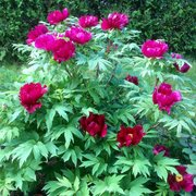 ... Photo Of Cricket Hill Garden   Thomaston, CT, United States ...