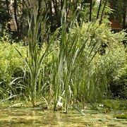 Le Jardin Naturel 13 Photos Jardin Botanique 120 Rue De La