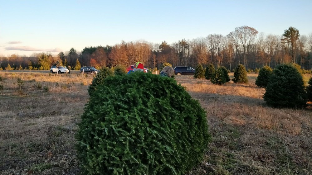 Merry Christmas Trees: 105 River Rd, Windham, ME