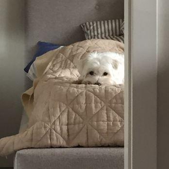 Photo Of Novo Furniture Vancouver Bc Canada Cozy King