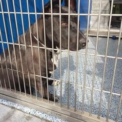 Long Beach Spcala Animal Shelter
