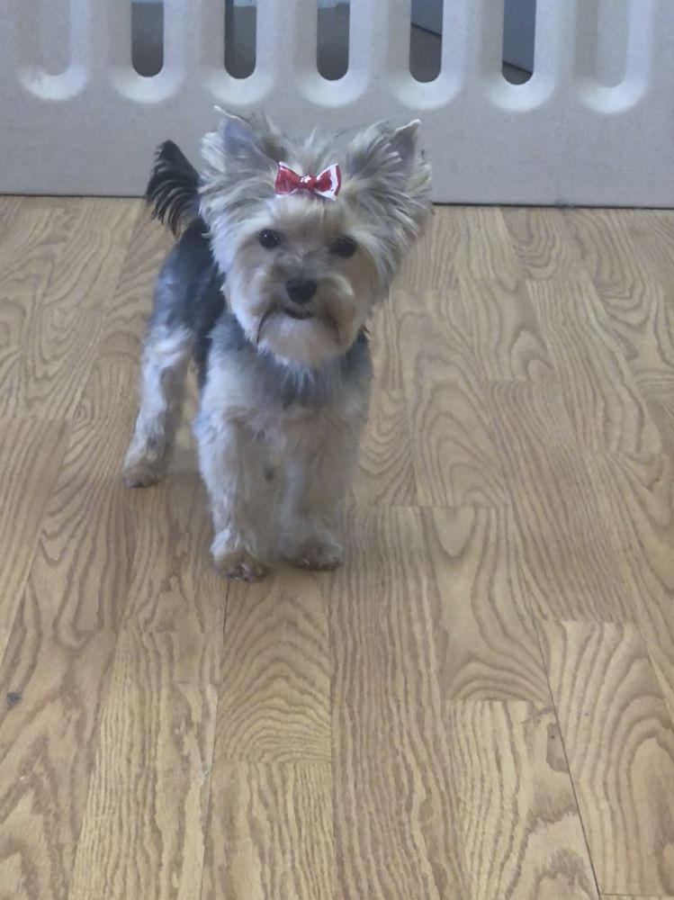 Seven Dogs Salon: 106 Cort Plz, Gretna, NE