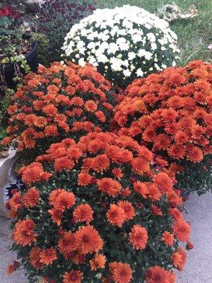 Photo Of Garden Center Lawrence Ks United States A Wonder Selection