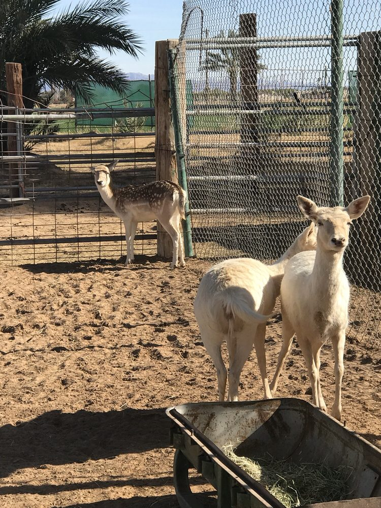The Camel Farm: 15672 S Ave 1E, AZ, AZ
