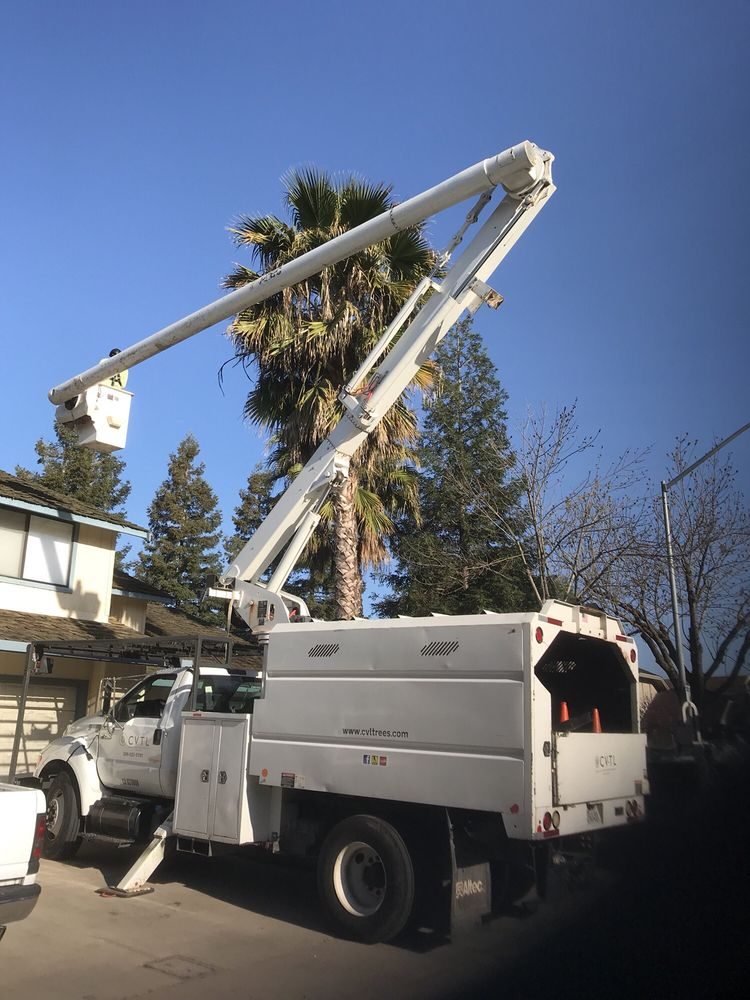 Central Valley Trees and Landscape Services: 1171 Partee Ln, Ceres, CA