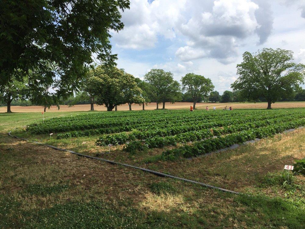 Batey Farms: 3250 Wilkinson Pike, Murfreesboro, TN