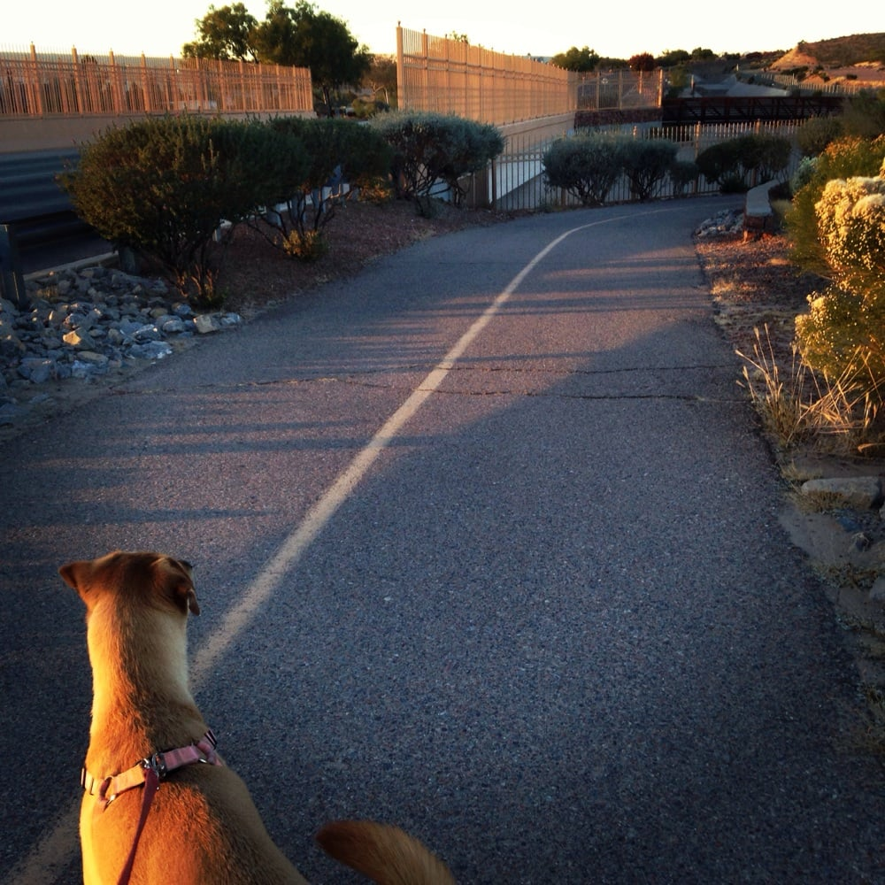 Pat O'Rourke Memorial Trail: Resler Dr At Helen Of Troy Dr, El Paso, TX