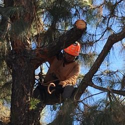 Photo Of Branch Managers Tree Care La Verne Ca United States