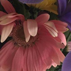 VIVIANO Flower Shop - Best Detroit Florist, Roses, Fresh ...