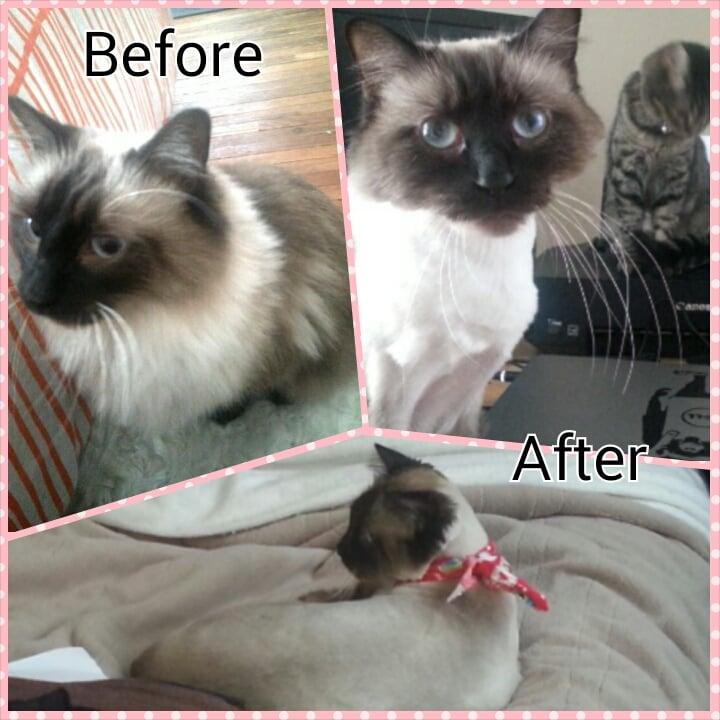 Serenity Pet Spa: 110 Kellogg Ave, Ames, IA