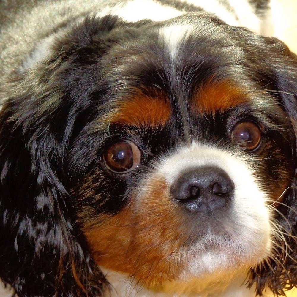 A Gentle Farewell - In-Home Euthanasia: Wellington, OH