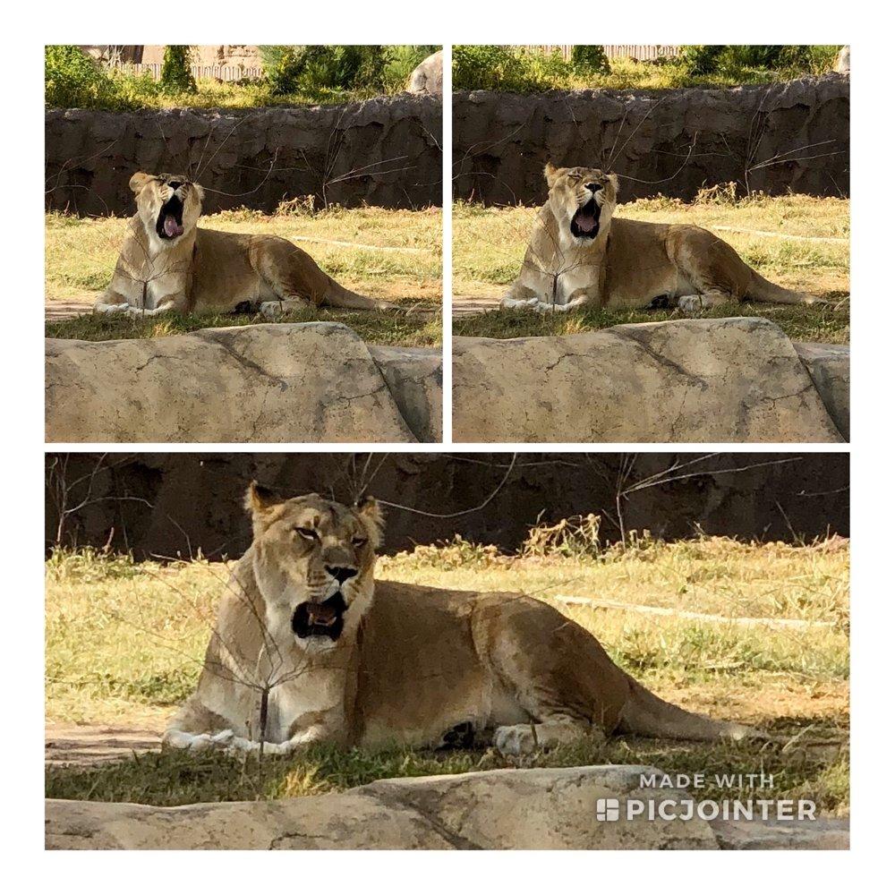 El Paso Zoo: 4001 E Paisano Dr, El Paso, TX
